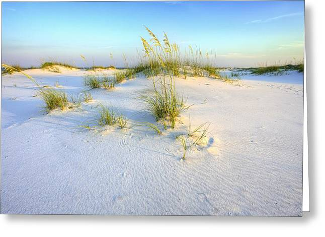 The Dunes Of Shell Island Greeting Card by JC Findley