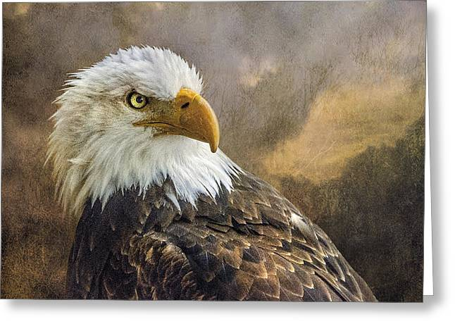 The Eagle's Stare Greeting Card