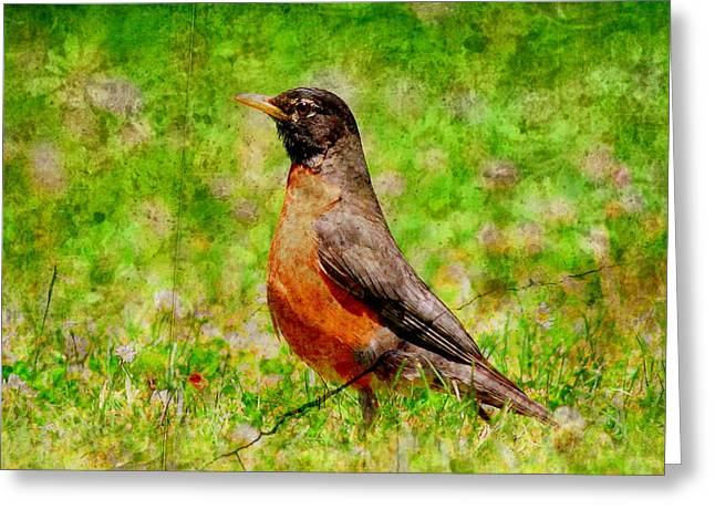 American Robin Greeting Cards - The Early Bird . texture Greeting Card by Wingsdomain Art and Photography
