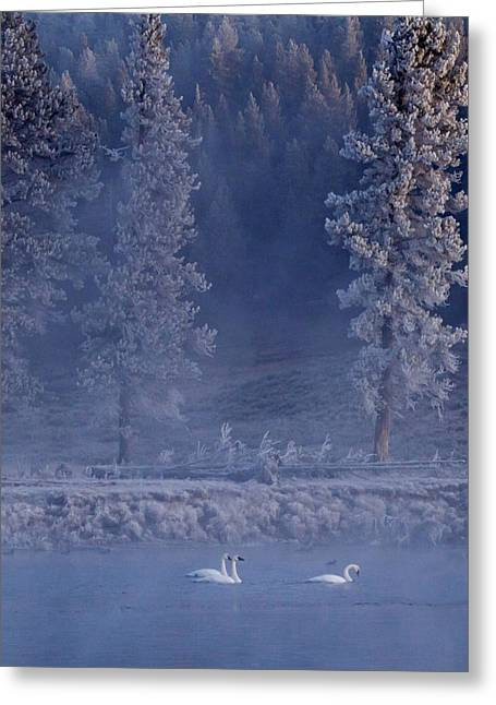 The Edge Of Winter Greeting Card by Sandy Sisti