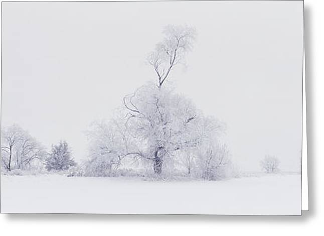 Greeting Card featuring the photograph The Eldar Tree by Dustin LeFevre