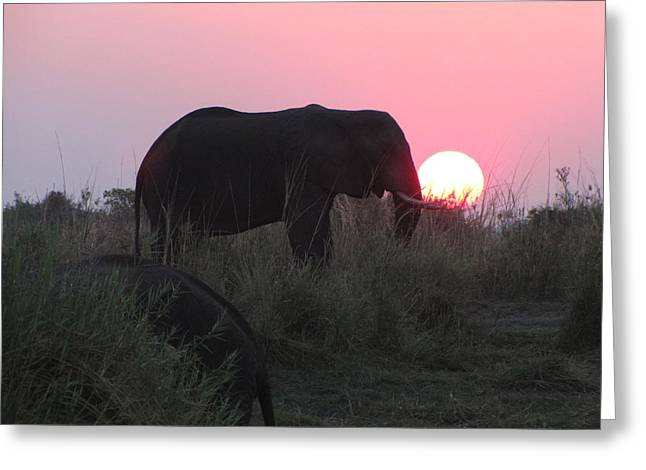 The Elephant And The Sun Greeting Card