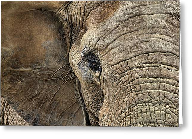 The Elephant Greeting Card by JC Findley