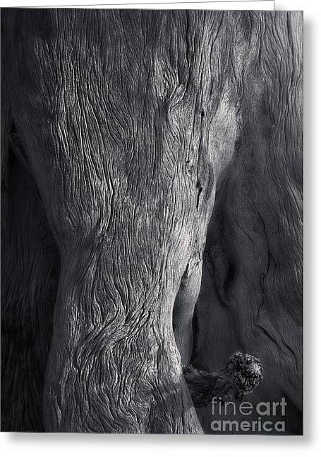 The Elephant Tree Greeting Card by Royce Howland