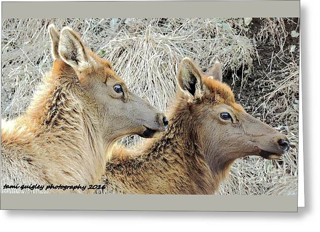 The Elk Of Winter  Greeting Card
