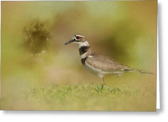 The Elusive Killdeer Greeting Card