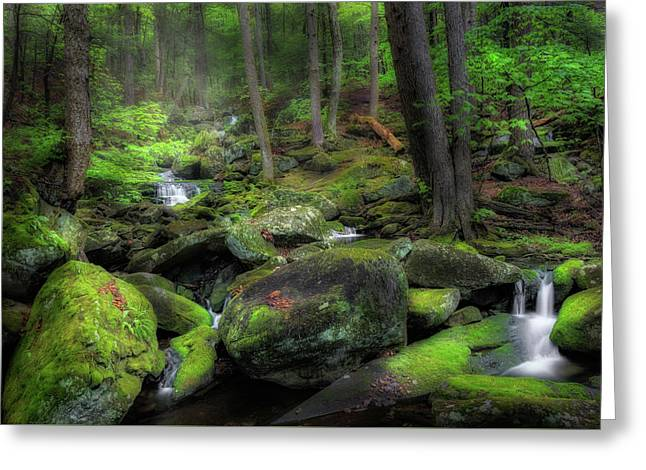 The Enchanted Forest Greeting Card by Bill Wakeley