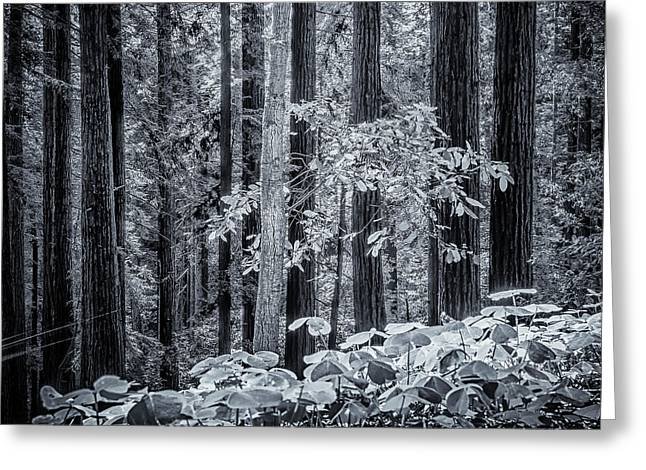 The Enchanted Forest Greeting Card by Steve Spiliotopoulos