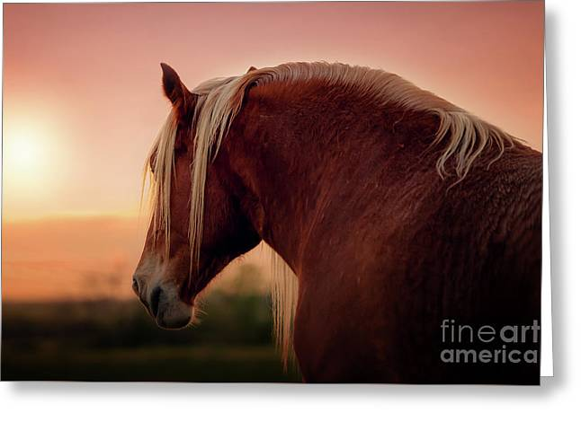 The End Of A Long Day At The Ranch Greeting Card by Tamyra Ayles