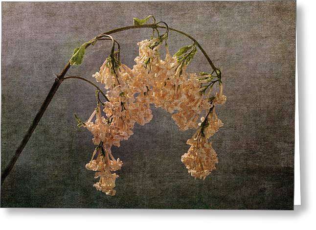 Greeting Card featuring the photograph The End Of The Lilacs by Randi Grace Nilsberg
