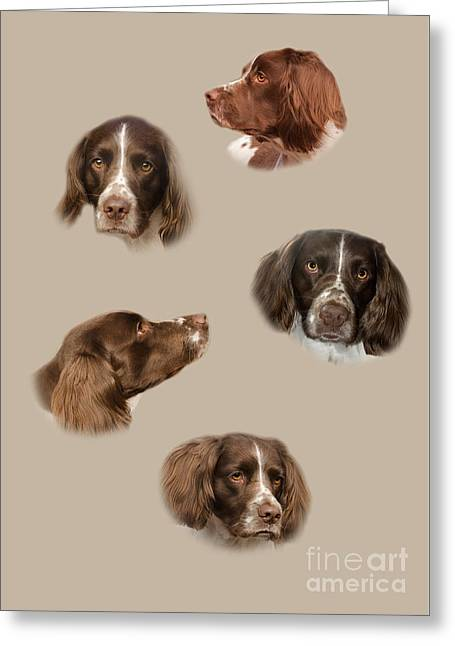 The English Springer Spaniel Greeting Card by Linsey Williams