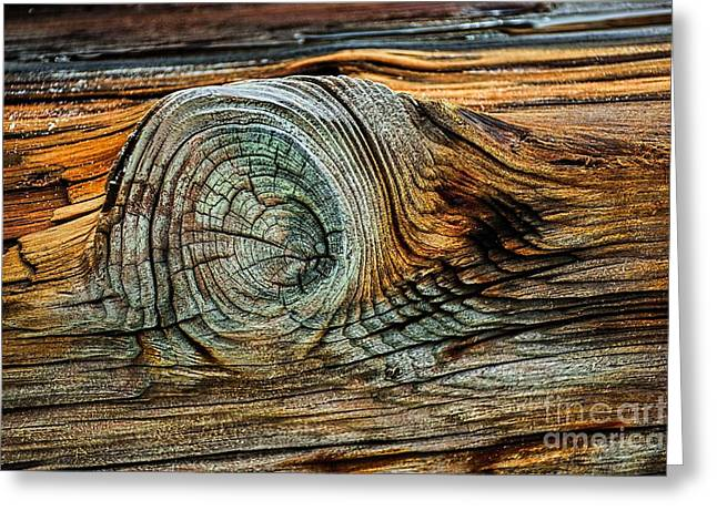 The Eye In The Wood Greeting Card by Norman Gabitzsch