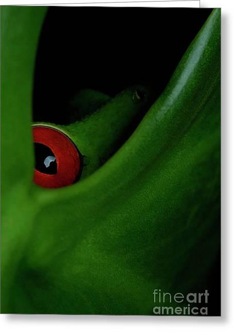 The Eye Greeting Card by Juan Carlos Vindas