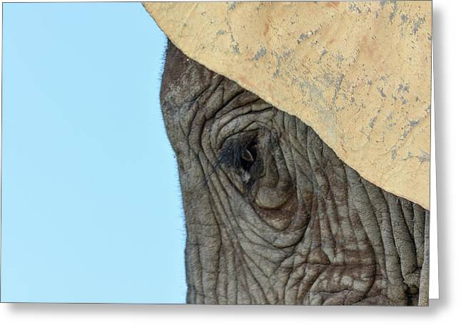 The Eye Of An Elephant Greeting Card