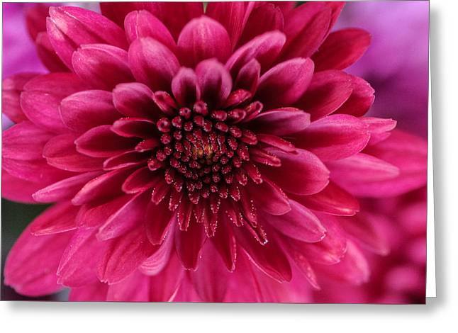 The Eye Of Pink Flower Greeting Card