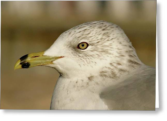 The Eye Of The Seagull Greeting Card