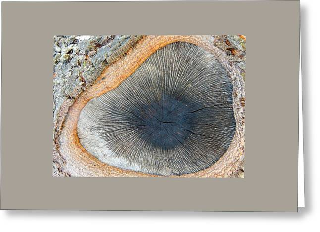 Eye Of The Tree Greeting Card