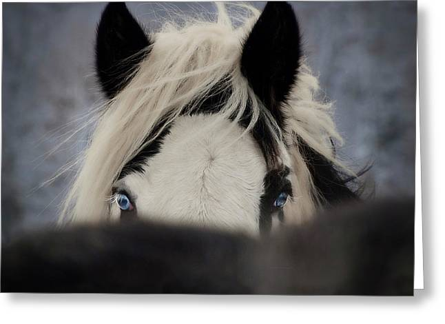 The Eyes Have It Greeting Card by Elizabeth Sescilla