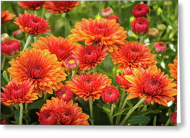 Greeting Card featuring the photograph The Fall Bloom by Bill Pevlor