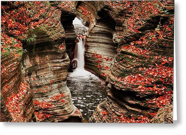 The Fall Colours Of Watkins Glen  Greeting Card by Hany J