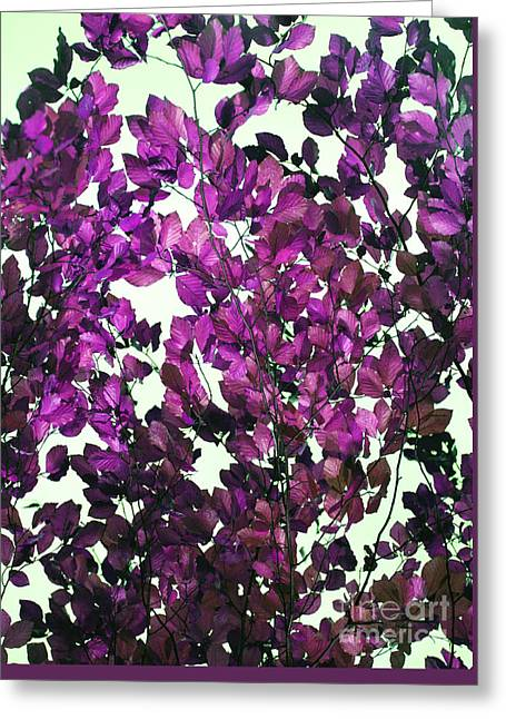Greeting Card featuring the photograph The Fall - Intense Fuchsia by Rebecca Harman