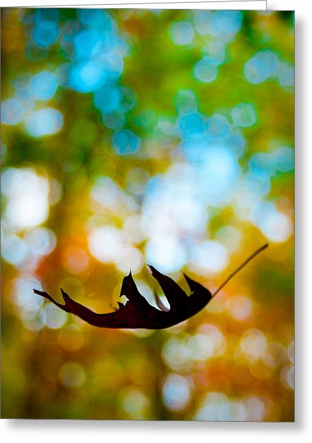 The Fall Greeting Card by Ryan Heffron