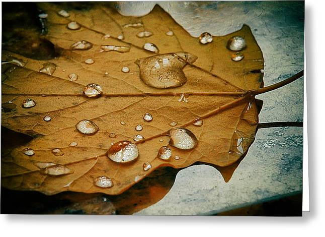 The Fallen Leaf Greeting Card