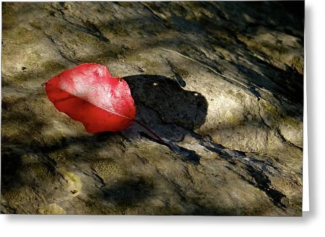 The Fallen Leaf Greeting Card