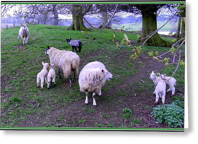 The Family Reunion Greeting Card by Mindy Newman