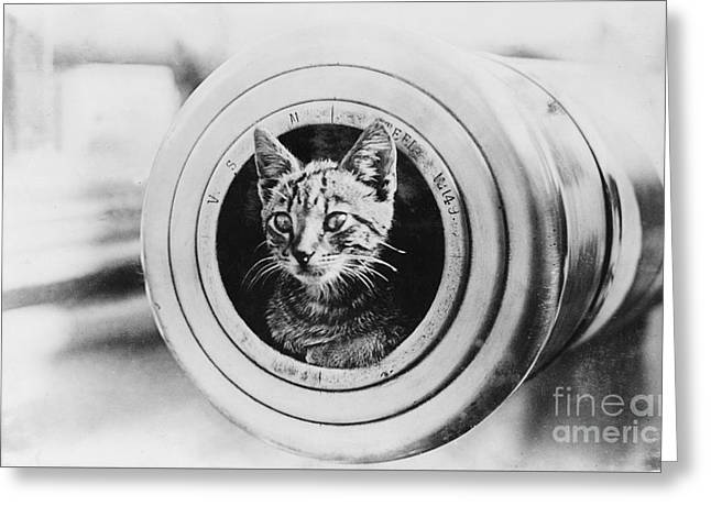 The Feline Mascot On Hmas Encounter During The First World War Greeting Card by MotionAge Designs