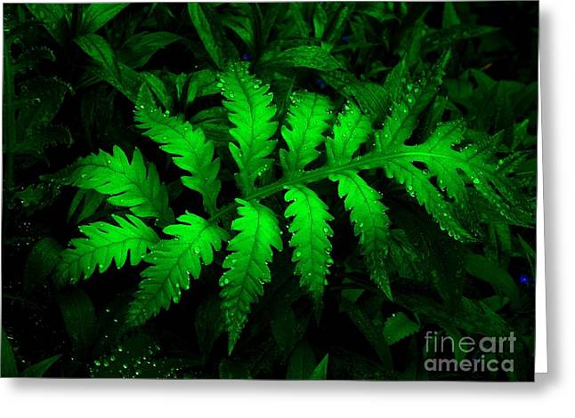 Greeting Card featuring the photograph The Fern by Elfriede Fulda