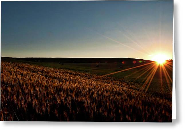 Greeting Card featuring the photograph The Field Of Gold by Mark Dodd