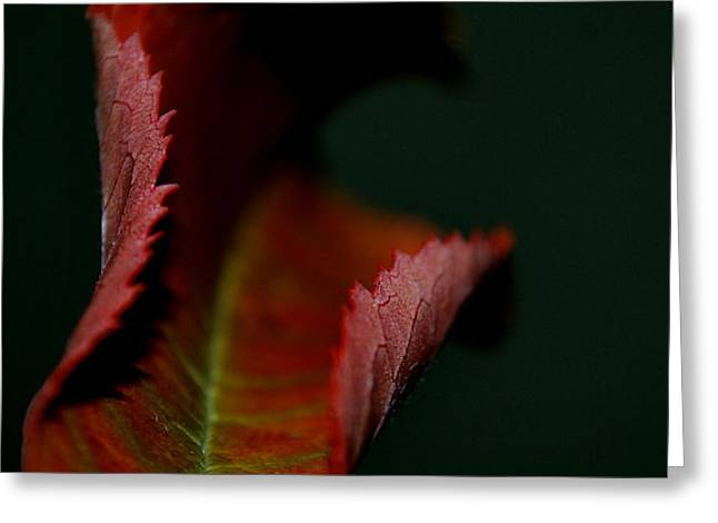 Greeting Card featuring the photograph The First Day Of Fall by Marija Djedovic