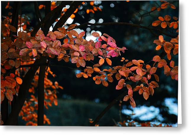 The Flair Of Autumn Greeting Card by Nicole Frischlich