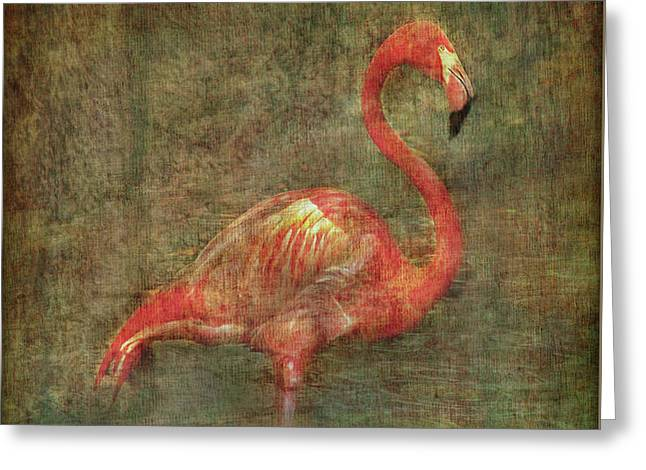 Greeting Card featuring the photograph The Flamingo by Hanny Heim