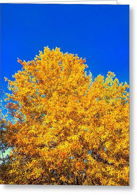 The Flare Of Fall On A Clear Day Greeting Card