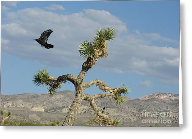 Greeting Card featuring the photograph The Flight Of Raven. Lucerne Valley. by Ausra Huntington nee Paulauskaite