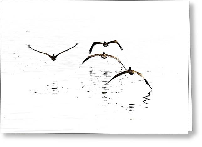 The Flight Of The Pelicans  Greeting Card