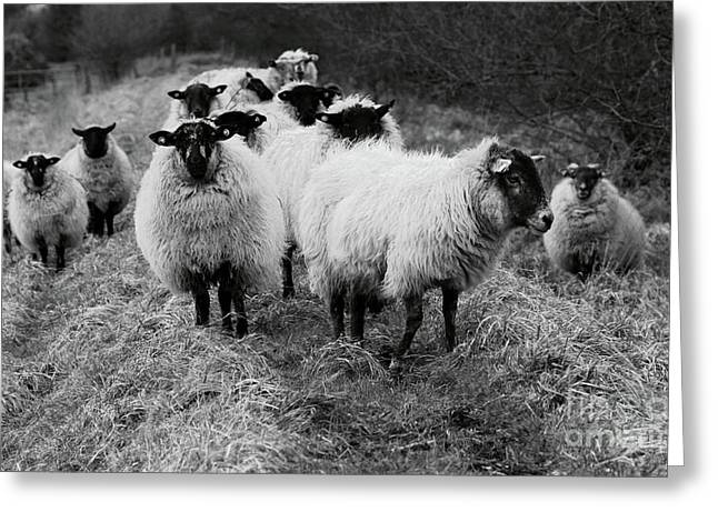 The Flock 1 Greeting Card
