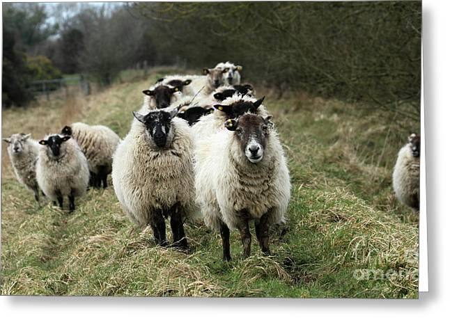 The Flock 2 Greeting Card