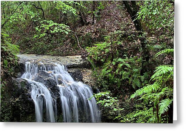 The Florida Rain Forest In Falling Waters State Park Greeting Card by JC Findley
