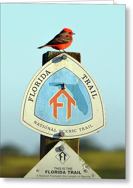 The Florida Trail Greeting Card