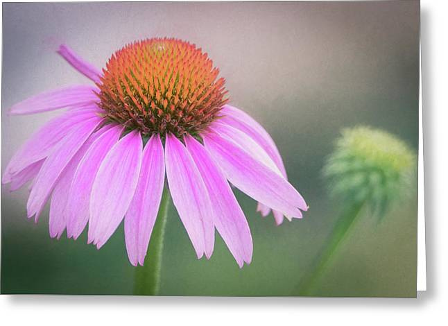 Greeting Card featuring the photograph The Flower At Mattamuskeet by Cindy Lark Hartman