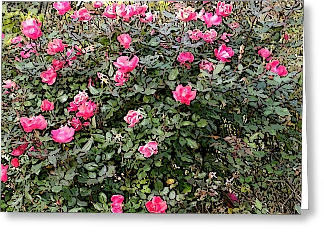 Rose Bush Greeting Card by Skyler Tipton