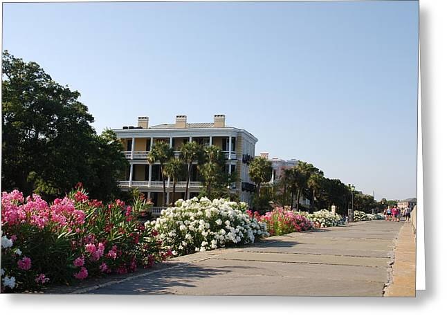 The Flowers At The Battery Charleston Sc Greeting Card by Susanne Van Hulst