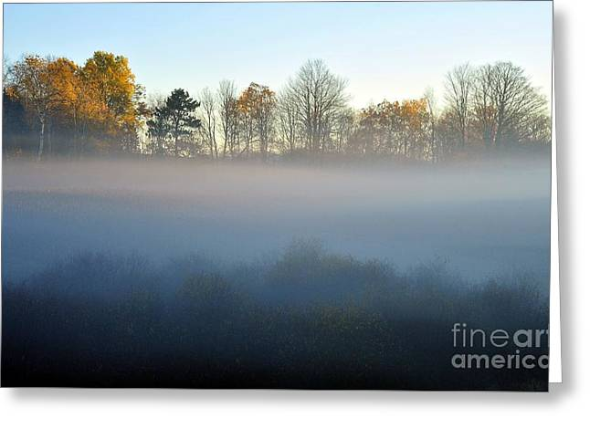 The Fog Comes On Little Cat Feet Greeting Card by Terri Gostola
