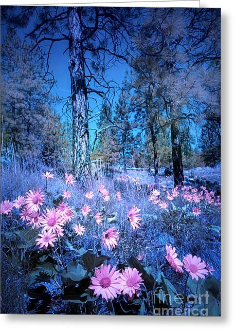 The Forest Blues Greeting Card by Tara Turner