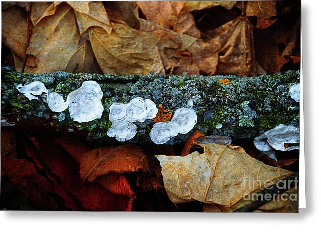 Greeting Card featuring the photograph The Forest Floor - Cascade Wi by Mary Machare