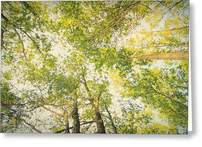 The Forest From Below Greeting Card by Dan Sproul