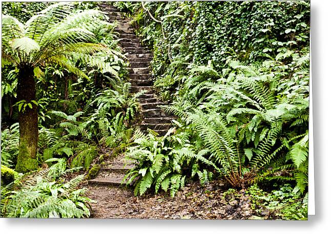 The Forest Stairwell Greeting Card by Rae Tucker